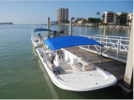 Dolphin Tours Marco Island