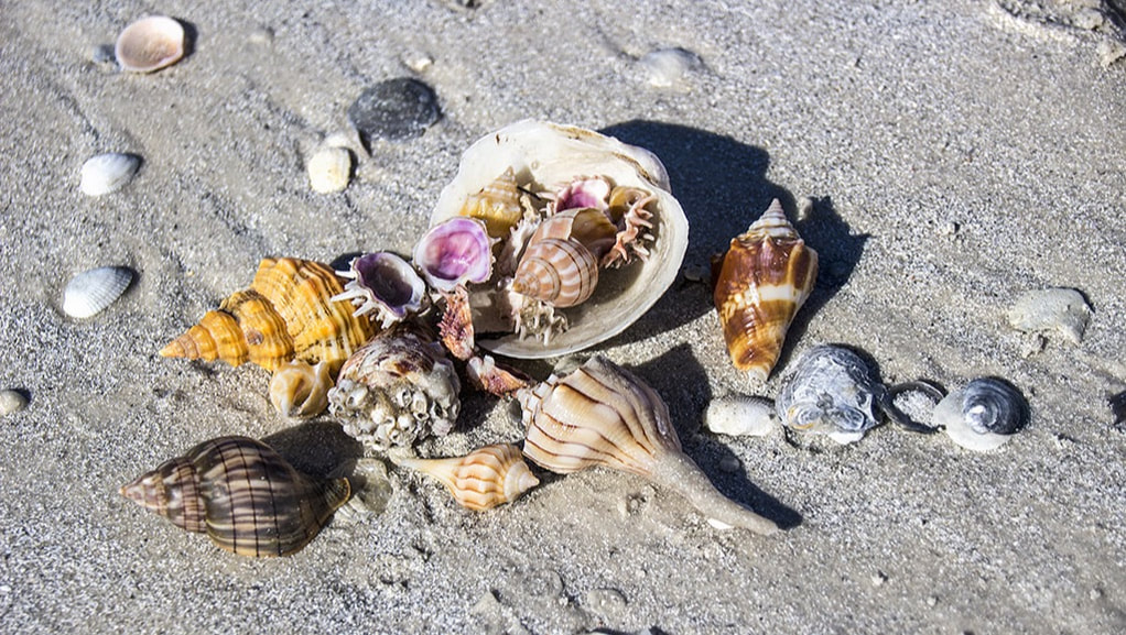 Shelling on Marco Island Beaches, Kids Activities